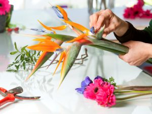 Hands holding orange flower for flower arrangement with red secateurs
