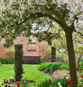 Garden with tree blossom