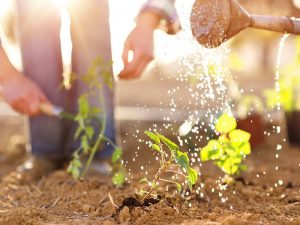 Watering can and plants growing in soil