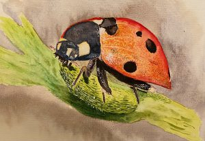 Drawing of a ladybird