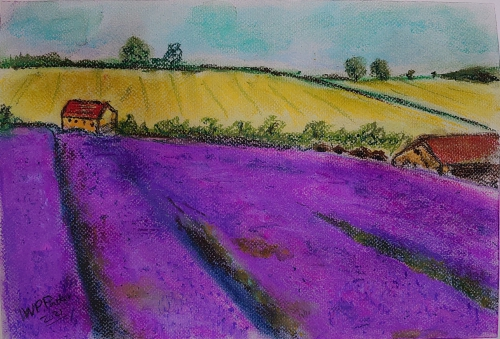 Lavender field in soft pastels