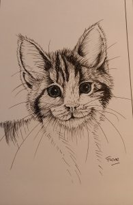 Line drawing of a kitten