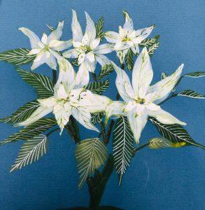 Painting of White Poinsettia flower