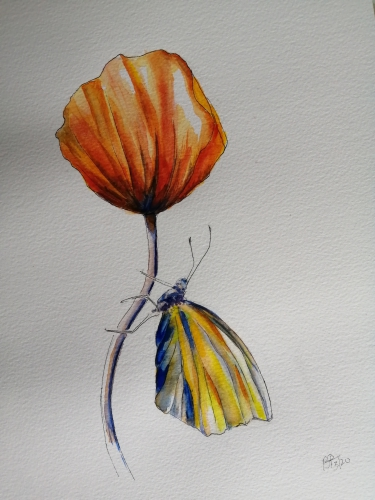Painting of a poppy and butterfly