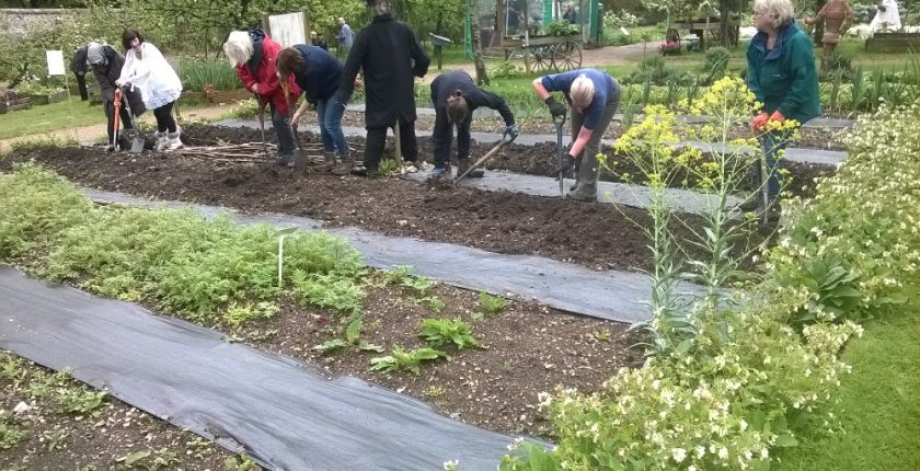 Group of people digging in vegetable patch