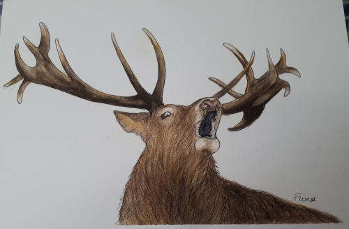 Drawing of a brown stag with antlers