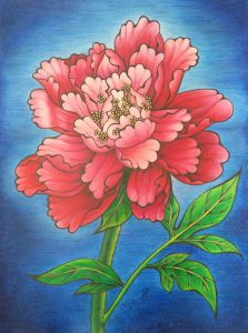 Coloured pencil drawing of a pink peony flower